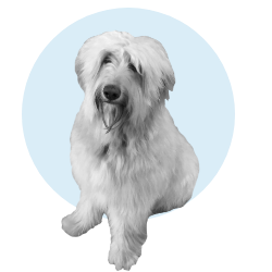 chien_image_icon